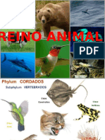 12. Reino Animal II Parte
