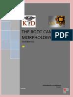 The Root Morphology.pdf