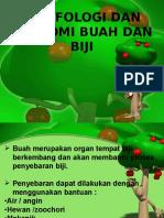 V.b. Morfologi Dan Anatomi Buah Dan Biji