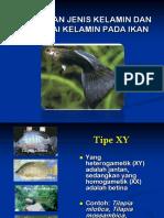 8. Penentuan Jenis Kelamin Dan Rangkai Kelamin Ikan
