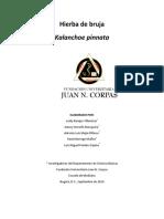Monografia Kalanchoe pinnata.pdf