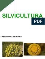 SILVICULTURA Especies de Flora