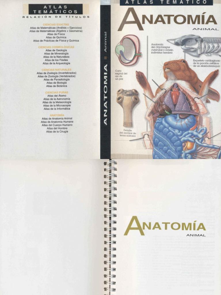 Anatomía Animal.pdf