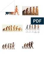 teoria evolucionista