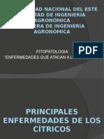 ENFERMEDADES DE CÍTRICOS