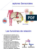 los receptores sensoriales
