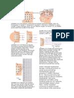 Fitzgerald's Neuroscience Page 291-292