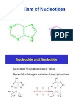 Purine Nucleotide