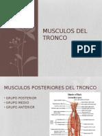 Musculos de Espalta