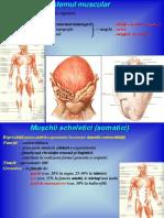 Sistemul-muscular.pdf