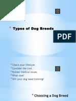 Types of Dog Breeds