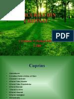 Parcurile Din Chisinau