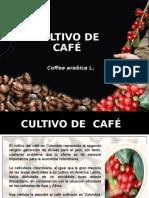 Cultivo de Cafe Examen 1
