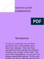 toxoplasma gondi.ppt