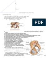 Pelvis and Perineum Lecture Notes