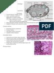 Female Reproductive System Histology I