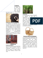 Producción Agrícola Guatemala