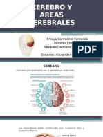 Cerebro y Areas Cerebrales (2)