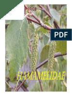 Sp 08 Hamamelidae