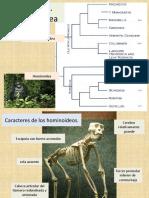 17_PVyHumana-Hominoideos (1).pdf
