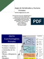 013a PAVYH Euarchontoglires primates.pdf