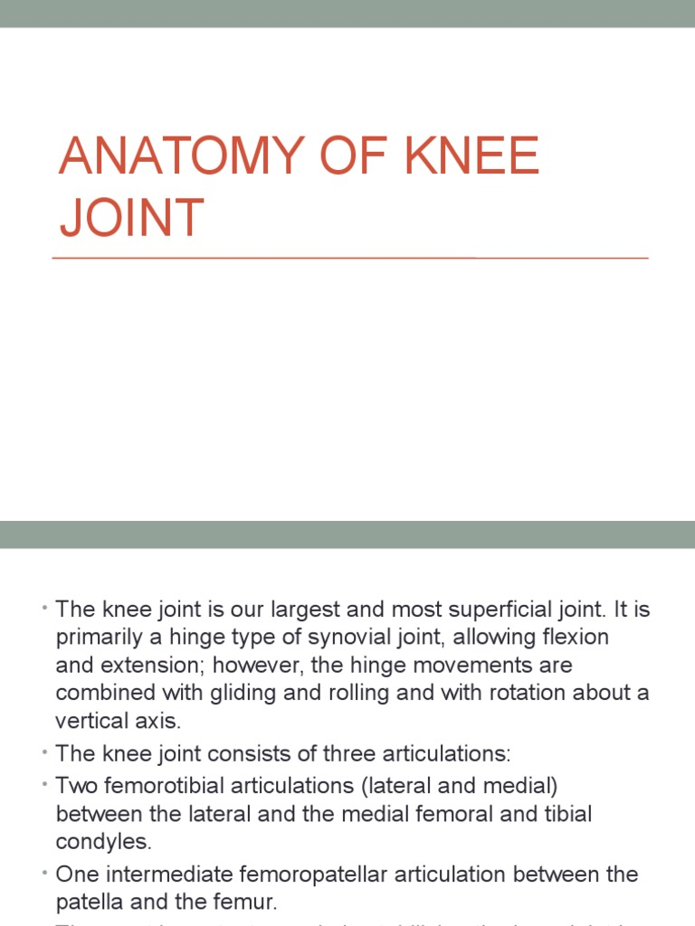 Anatomy of Knee Joint | Knee | Joints