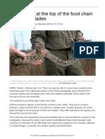 python-big-gulp-24772-article only