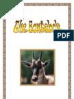*Endangered* Bontebok of Southern African by Donnette E Davis, St Aiden's Homeschool, South Africa