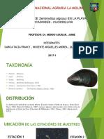 Exposicion- Evalua-Semimytilus algosus.pptx