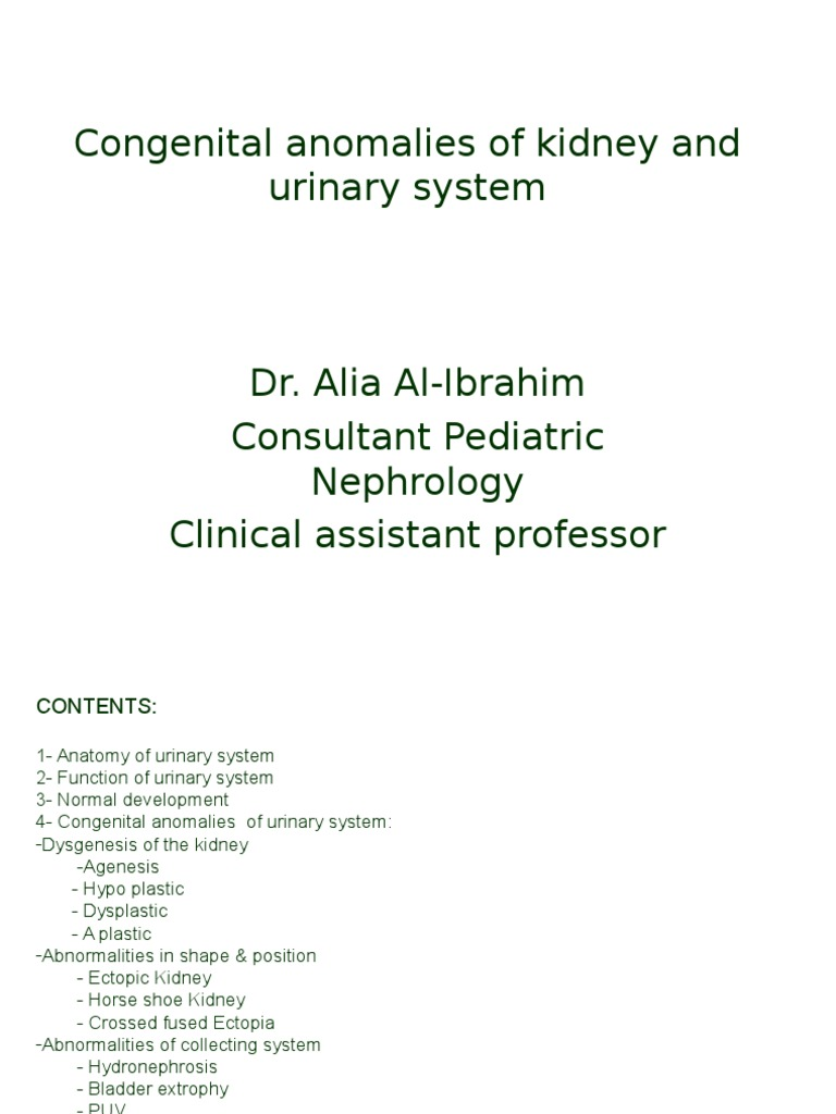 Congenital Development of Urinary System.ppt | Kidney | Urinary System