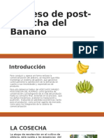 Proceso de Post-cosecha Del Banano