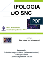 Pratica - Morfologia Do SNC
