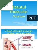 contractia musculara