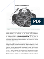 Informacion Sobre Region Caudal Del Puente