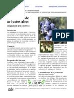 arándanos.pdf