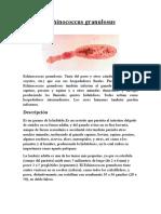 Echinococcus Granulosus y Taenia Multiceps