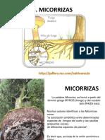 Micorrizas y nódulos bacterianos ESPE