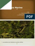 Ecología Marina Pantanos Home
