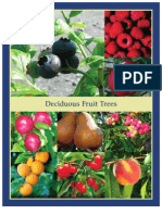 Deciduous Fruit Trees - Leo Gentry Nursery
