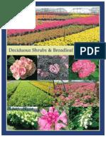 Deciduous Shrubs & Broadleaf Evergreens - Leo Gentry Nursery