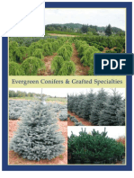 Evergreen Conifers & Grafted Specialties - Leo Gentry Nursery