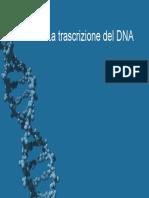 Trascrizione-del-Dna.pdf