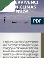 Supervivencia en Climas Fríos