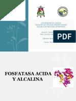 Fosfatasa Acida y Alcalina