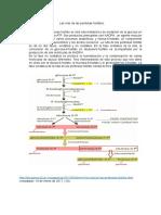 FOSFOGLICANOS (15)