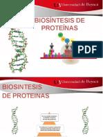 4.2 Biosintesis de Proteinas Animaciones (1)