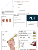 Muscular System Tour Activity Form