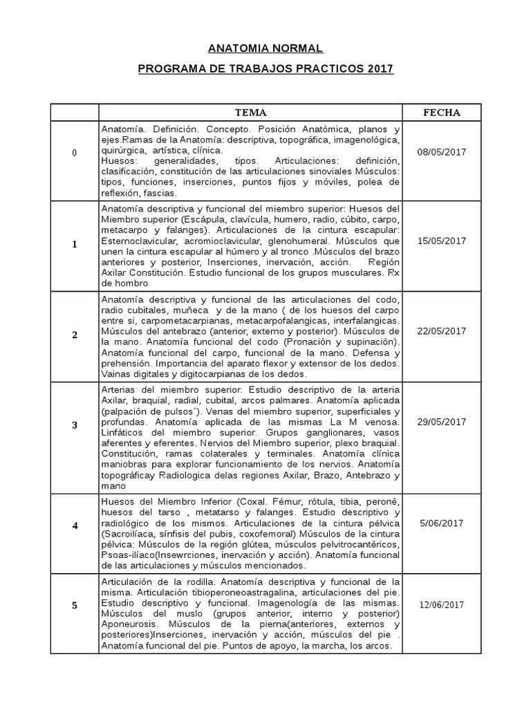 Bonito Definición De La Anatomía Funcional Imágenes - Anatomía de ...