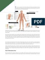 arteri ektremitas atas dan ekstremitas bawah.docx