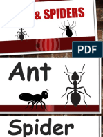 ants   spiders lesson 2